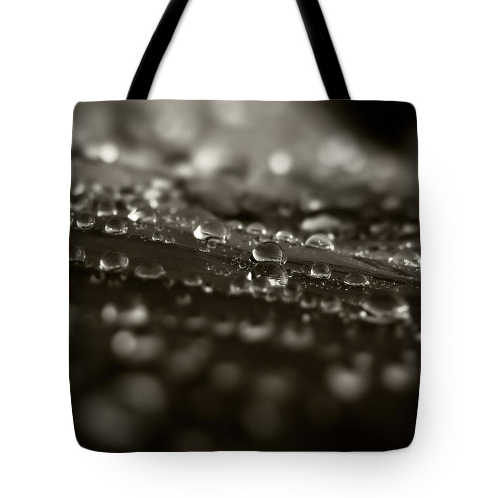 Dew Tote Bag featuring the photograph Morning Dew by Bob Orsillo