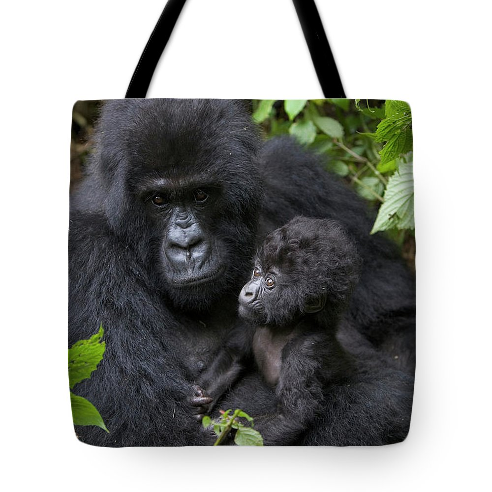 Mp Tote Bag featuring the photograph Mountain Gorilla And Infant by Suzi Eszterhas