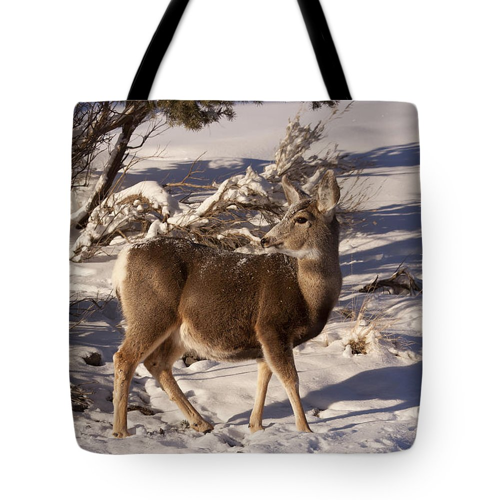 Deer Tote Bag featuring the photograph Mule Deer  #6339 by J L Woody Wooden