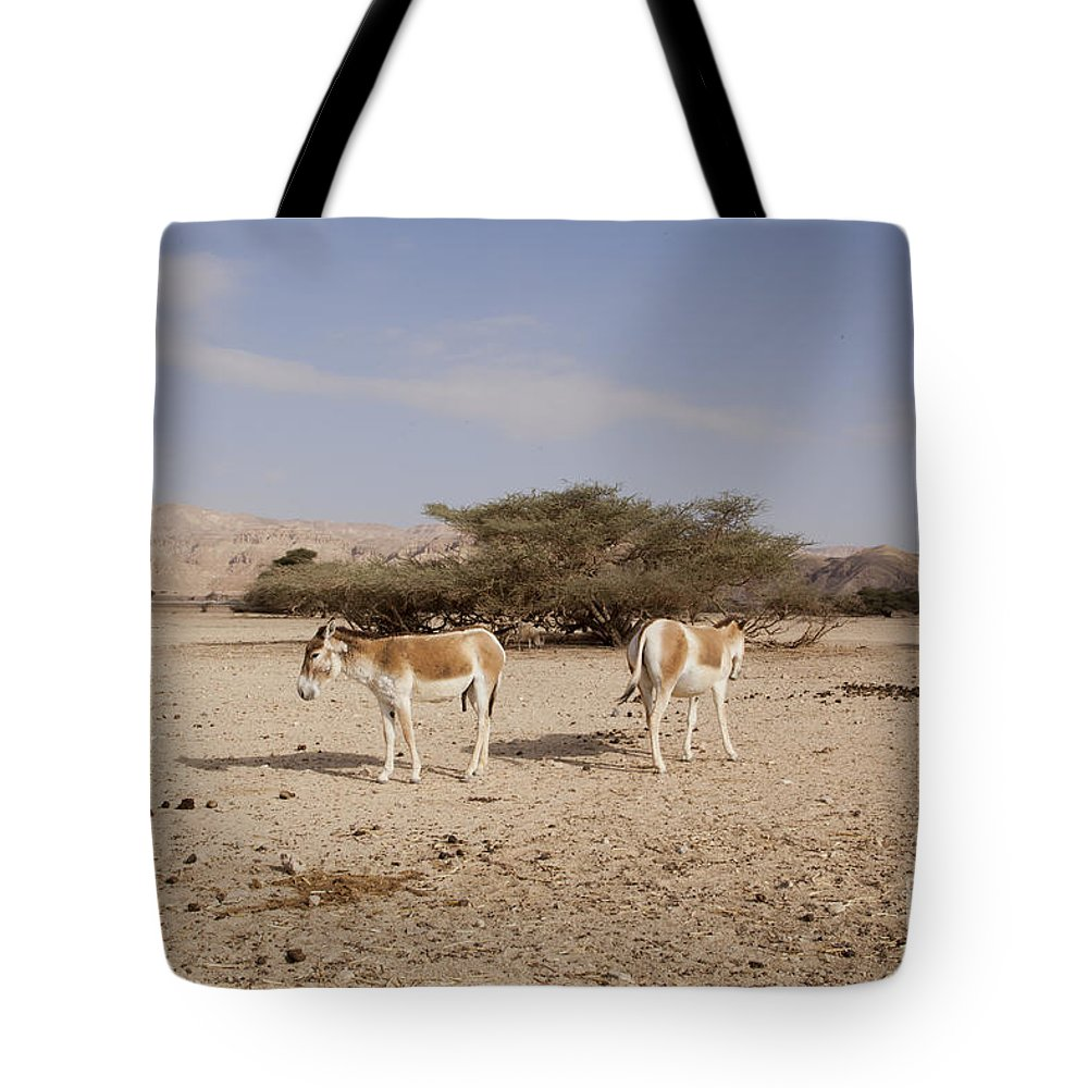 Wildlife Tote Bag featuring the photograph Onager Equus Hemionus by Eyal Bartov