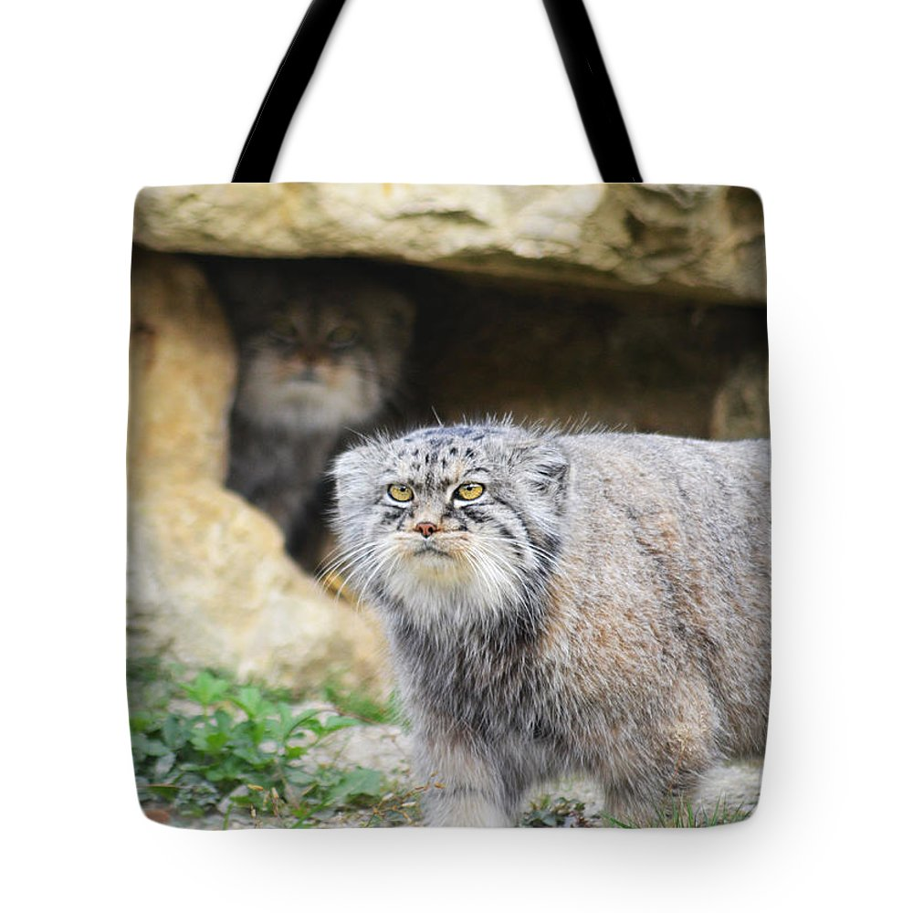 Pallas Cat Tote Bag featuring the photograph Pallas Cat by Alex Lyons