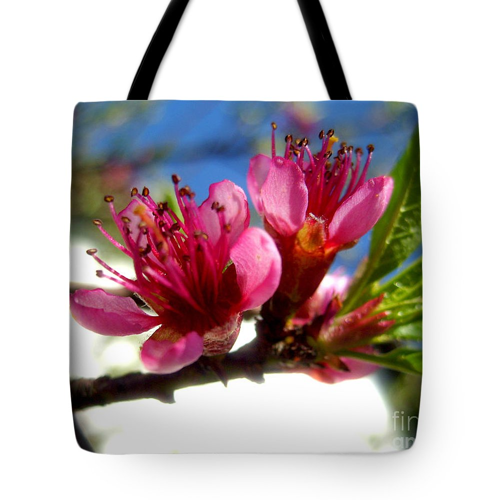 Blossom Tote Bag featuring the photograph Peach Blossom by Nina Ficur Feenan