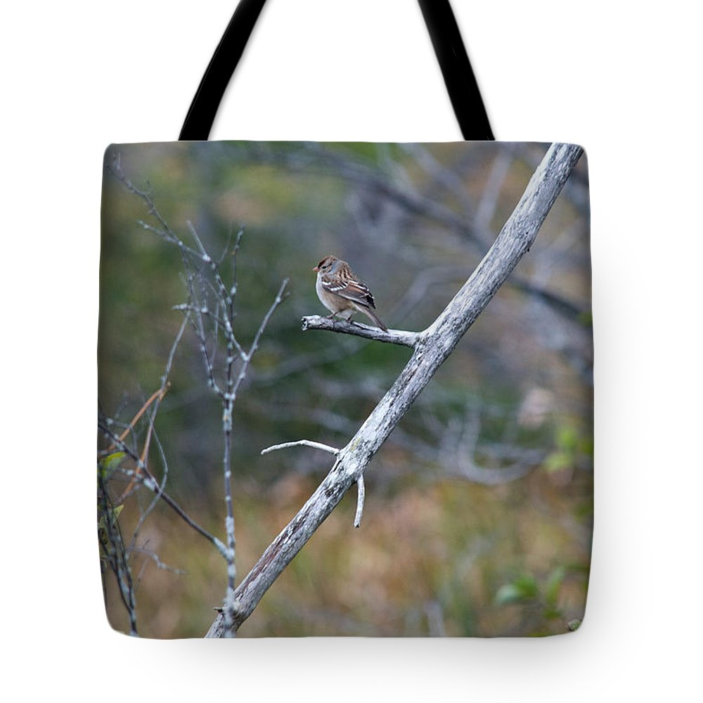 Nature Tote Bag featuring the photograph Perched by Linda Kerkau