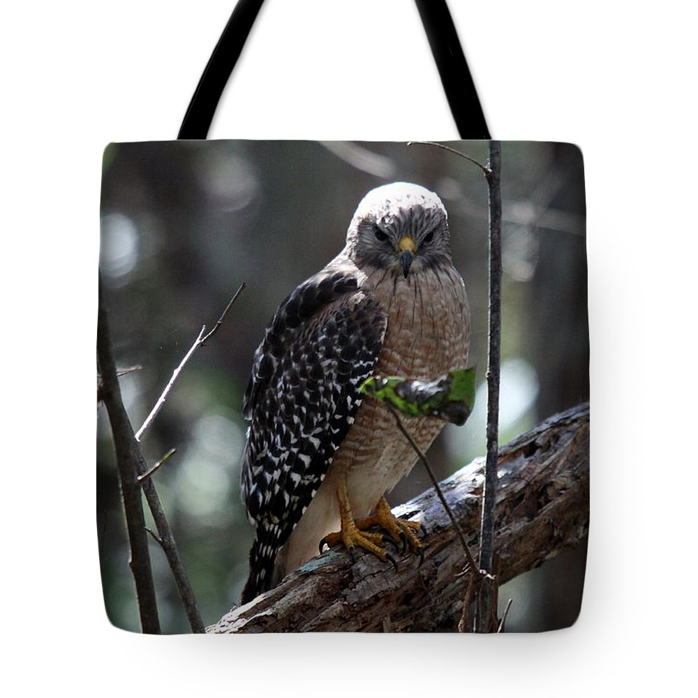 Hawk Tote Bag featuring the photograph Red - Shouldered Hawk II by Christiane Schulze Art And Photography