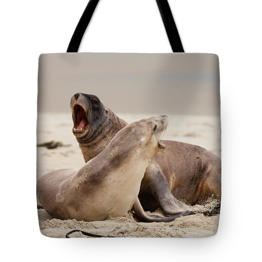 South Island Tote Bag featuring the photograph Rough Courtship Of Male And Female Hookers Sealions by Stephan Pietzko