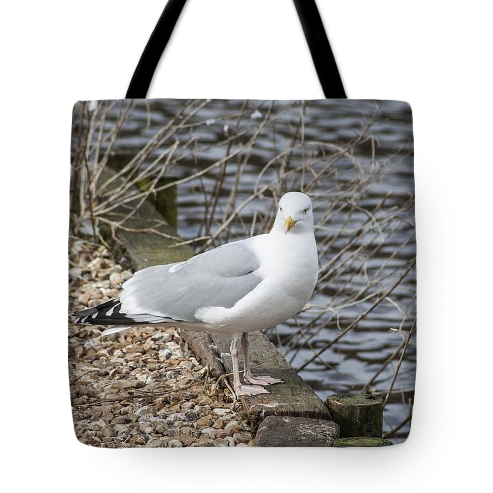 Bird Tote Bag featuring the photograph Seagull by FL collection