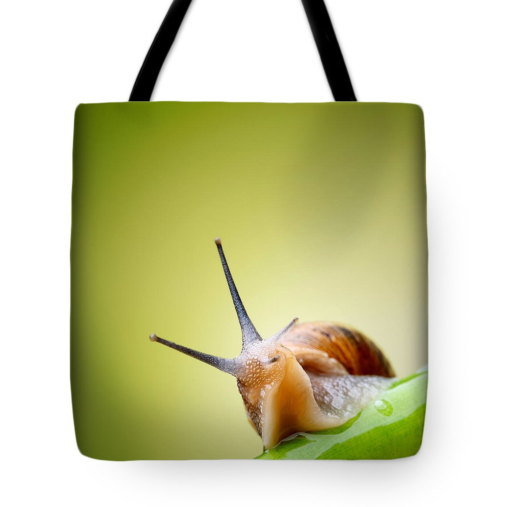 Snail Tote Bag featuring the photograph Snail On Green Stem by Johan Swanepoel
