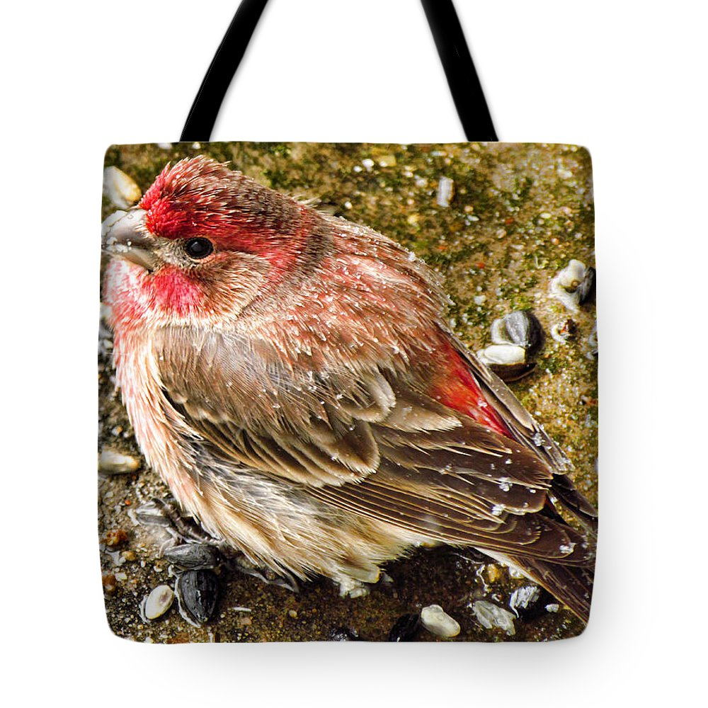 Purple Tote Bag featuring the photograph Snow Bird by Shannon Story
