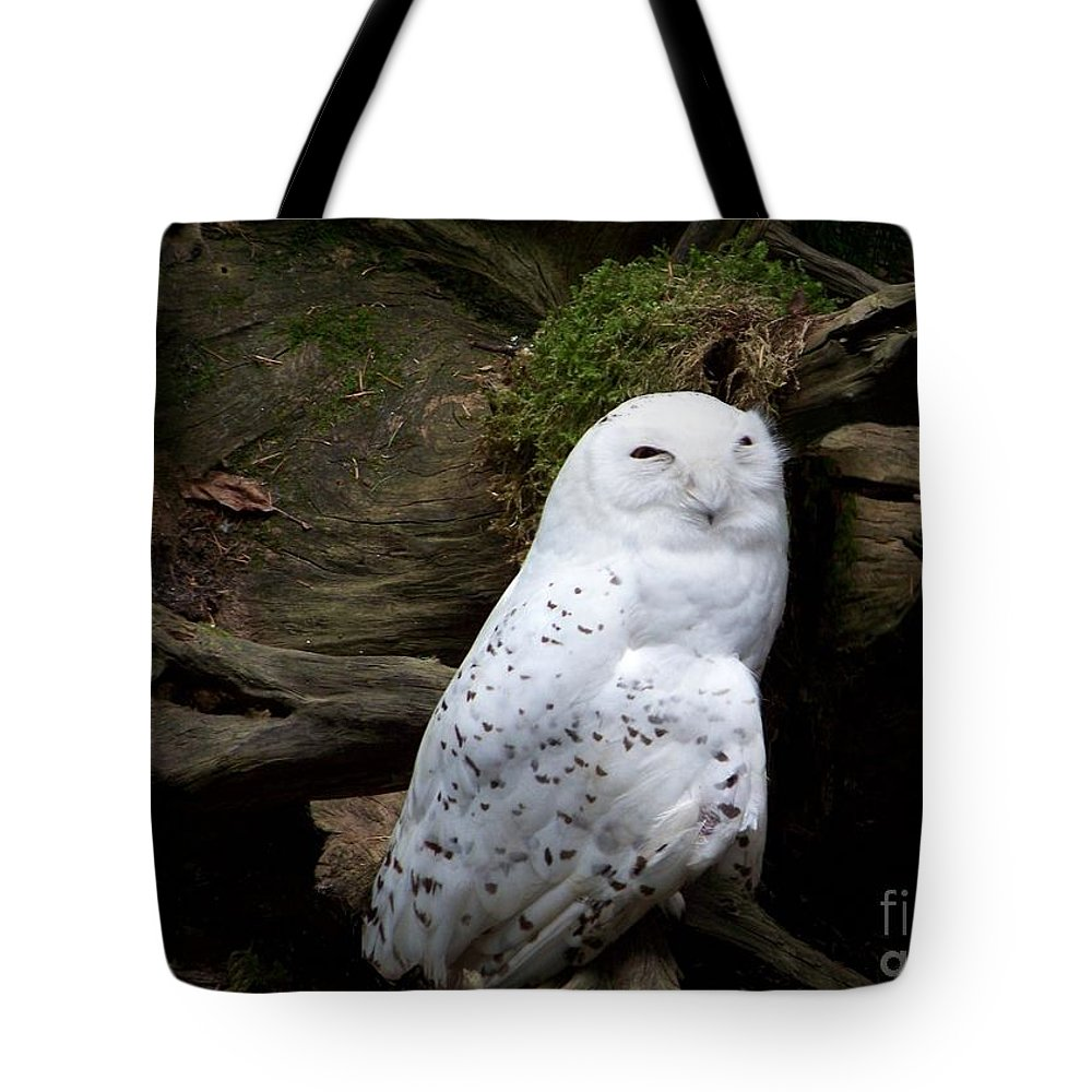 Owls Tote Bag featuring the photograph Snowy Owl by Charles Robinson