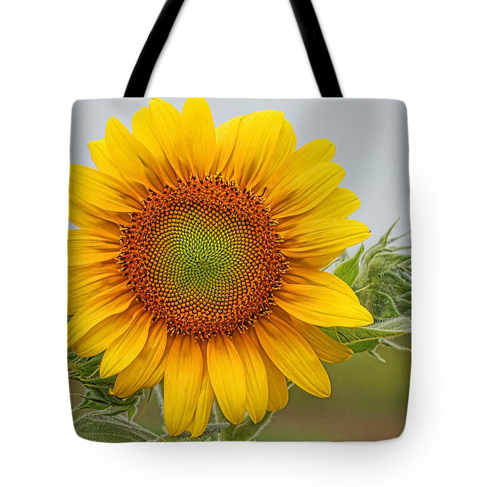 Sunflower Tote Bag featuring the photograph Sunflower by Alan Hutchins