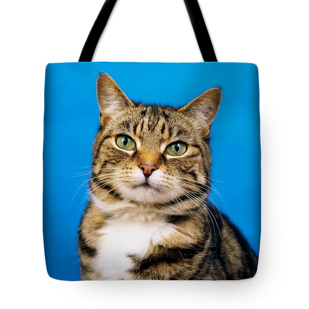 Tabby Cat Tote Bag featuring the photograph Tabby Cat by The Irish Image Collection