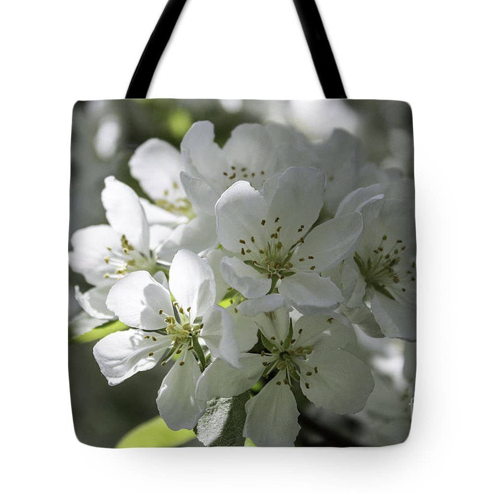 White Crabapple Tree Tote Bag featuring the photograph Tea Crabapple by Arlene Carmel