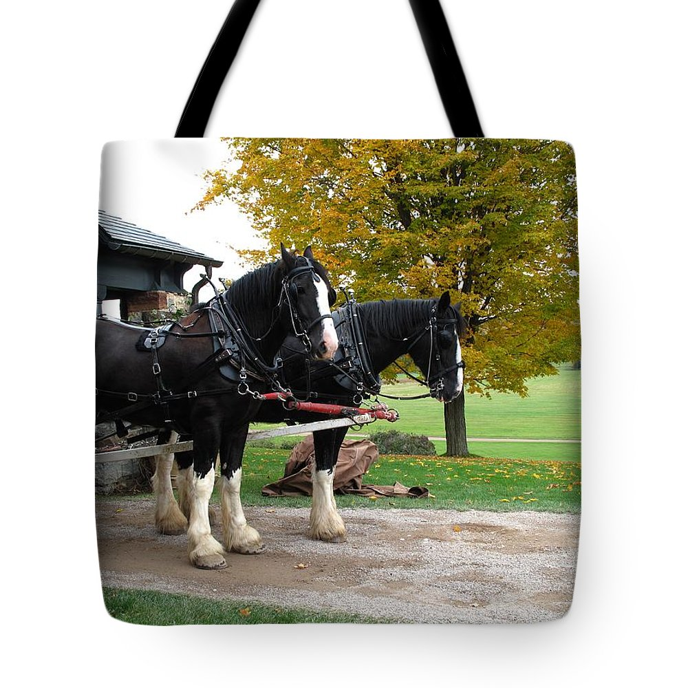 Horses Tote Bag featuring the photograph Team Work by Barbara McDevitt