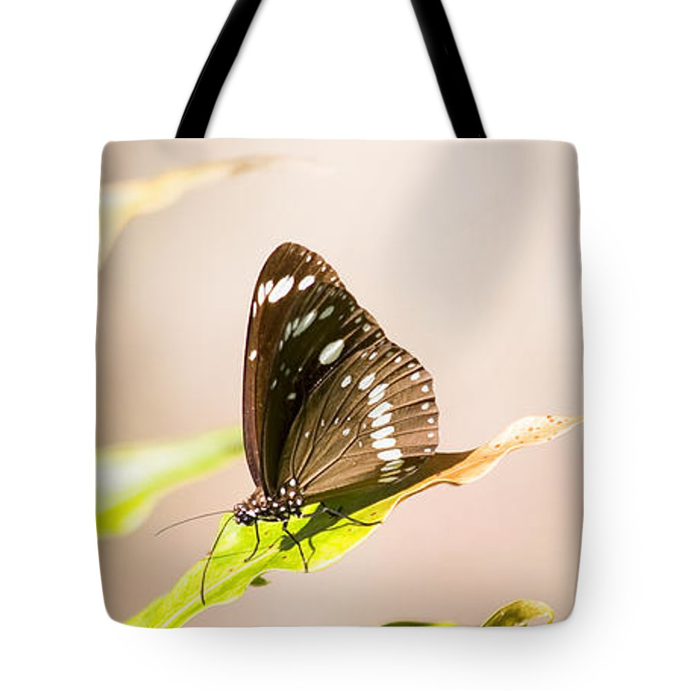 Bug Tote Bag featuring the photograph Tropical Butterfly by Jorgo Photography - Wall Art Gallery