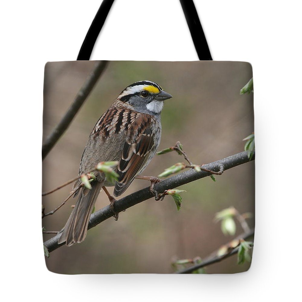 Sparrow Tote Bag featuring the photograph White-throated Sparrow by Ken Keener