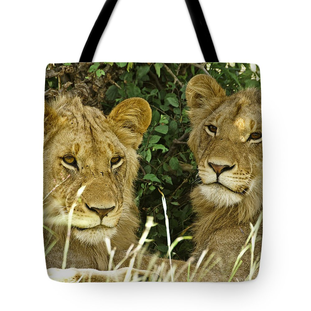 Lion Tote Bag featuring the photograph Young Brothers by Michele Burgess