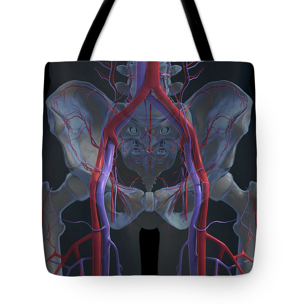 Transparent Tote Bag featuring the photograph The Cardiovascular System by Science Picture Co