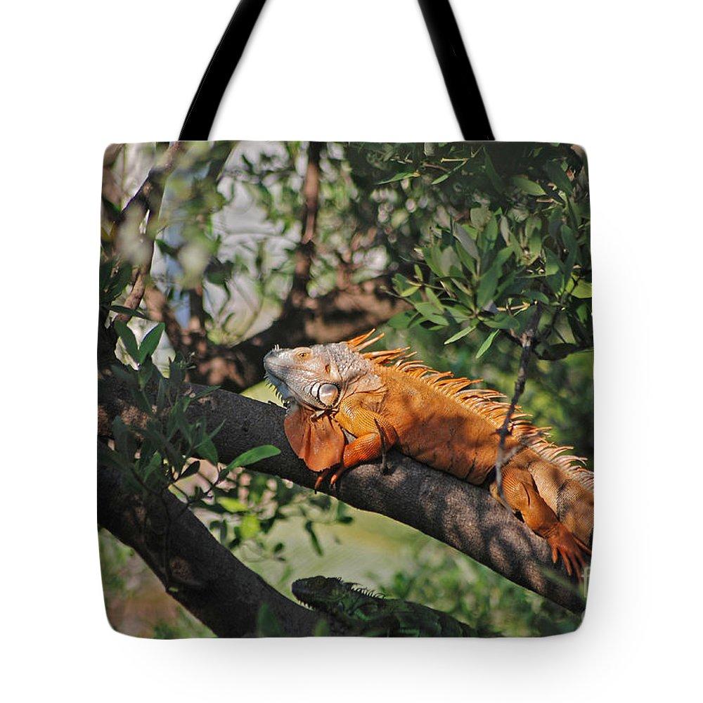 Iguanas Tote Bag featuring the photograph 25- Iguanas by Joseph Keane
