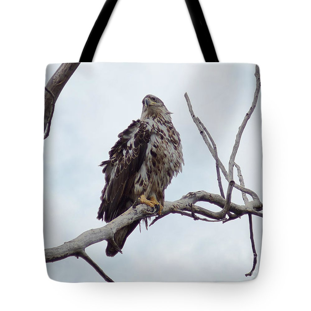Eagle Tote Bag featuring the photograph Bald Eagle by Lori Tordsen