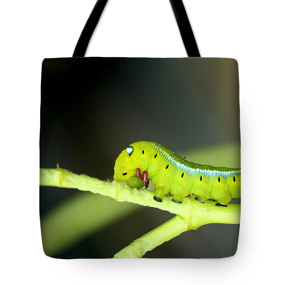 Butterfly Tote Bag featuring the photograph Butterfly by Heike Hultsch