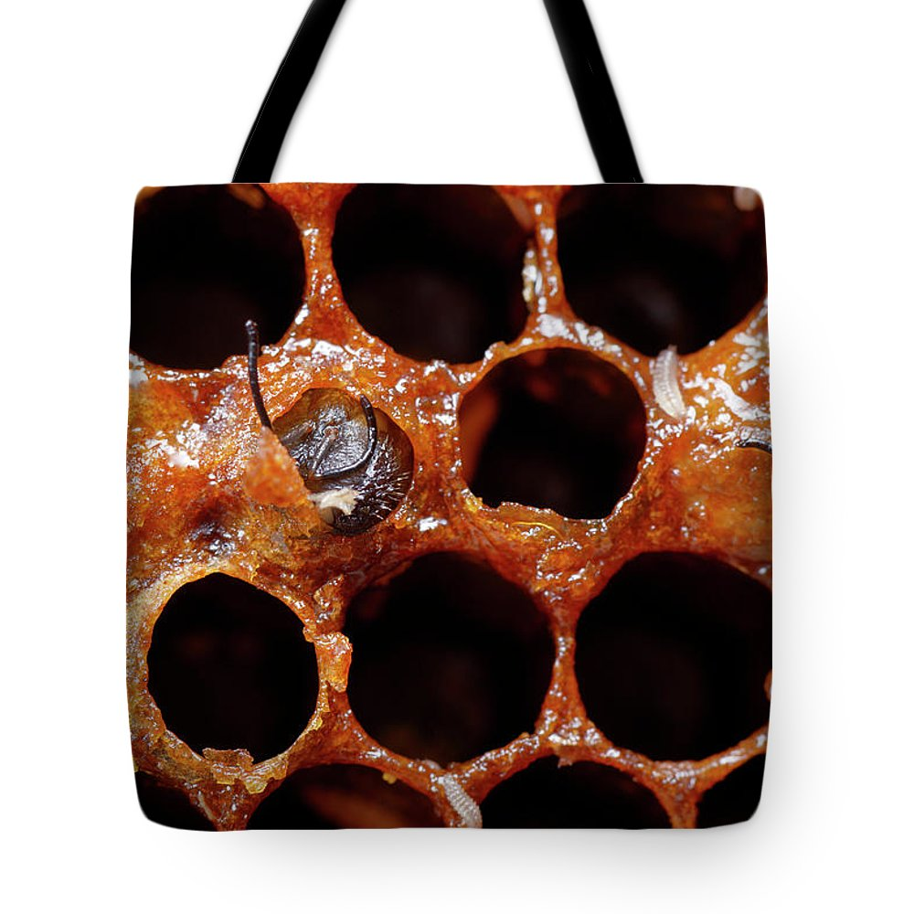 Worker Bee Tote Bag featuring the photograph A Honeybee Hive After Colony Collapse by Paul E Tessier