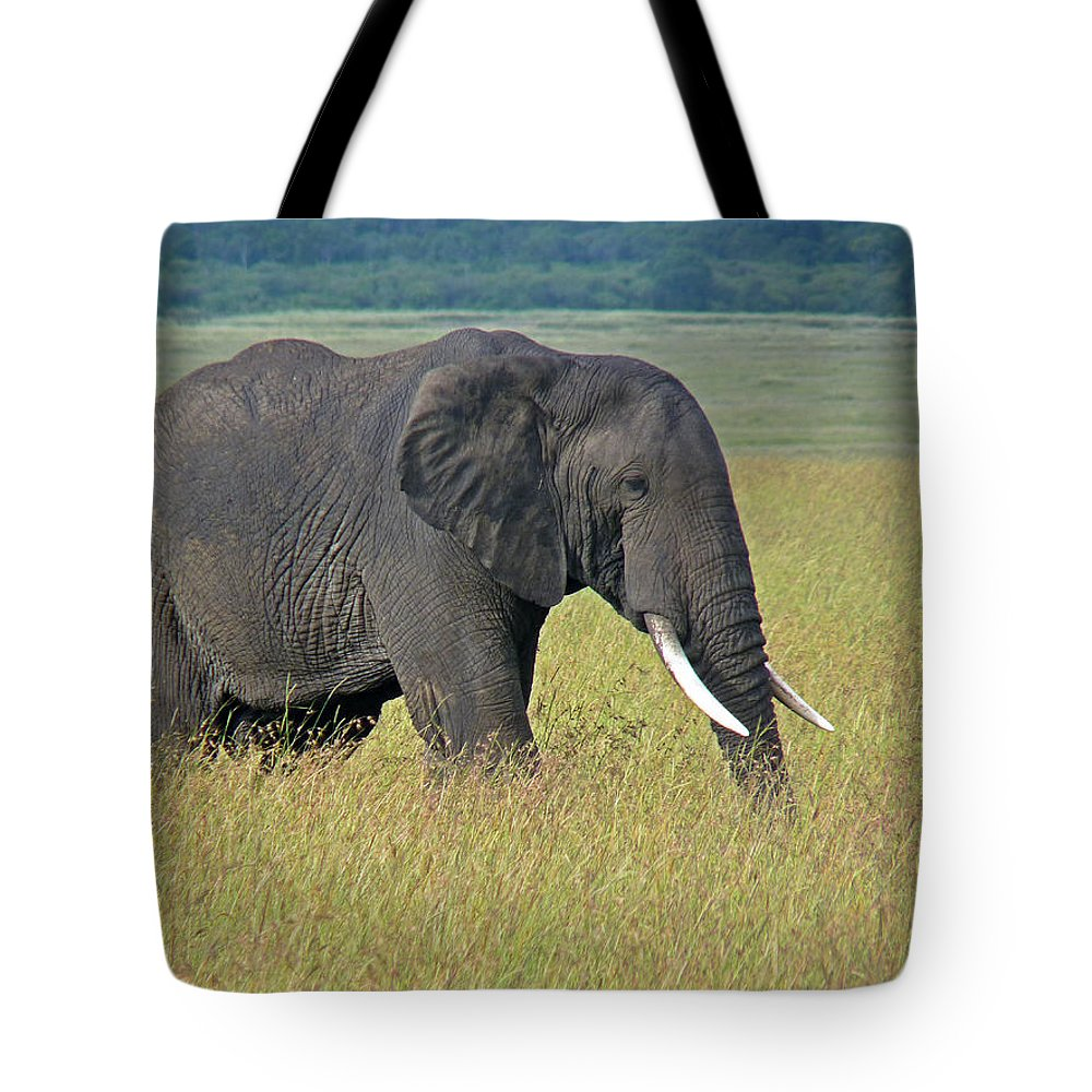 Elephant Tote Bag featuring the photograph African Elephant by Tony Murtagh