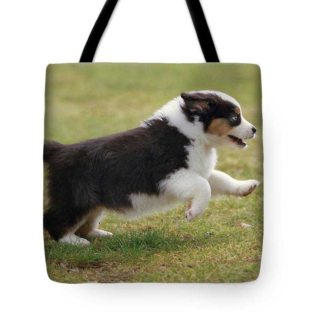 Australian Sheepdog Tote Bag featuring the photograph Australian Shepherd Puppy by Jean-Michel Labat