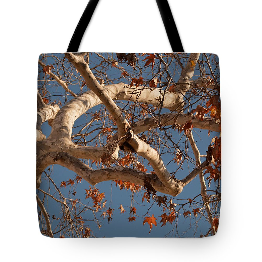 Leaves Tote Bag featuring the photograph Golden Autumn by Luv Photography