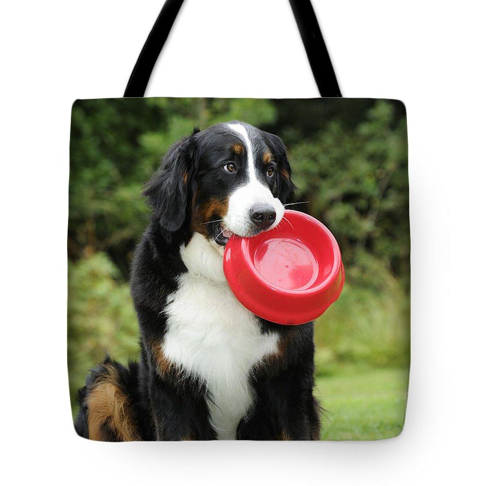 Bernese Mountain Dog Tote Bag featuring the photograph Bernese Mountain Dog by John Daniels