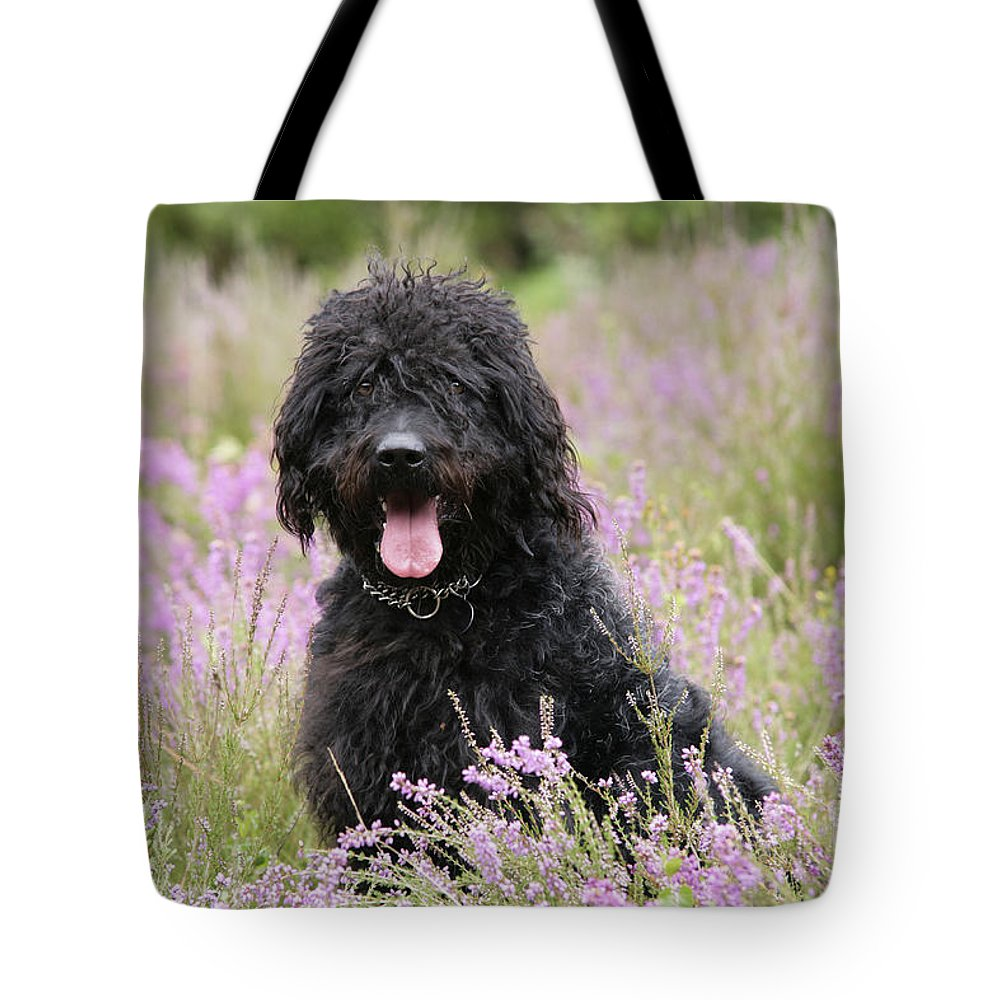 Labradoodle Tote Bag featuring the photograph Black Labradoodle by John Daniels