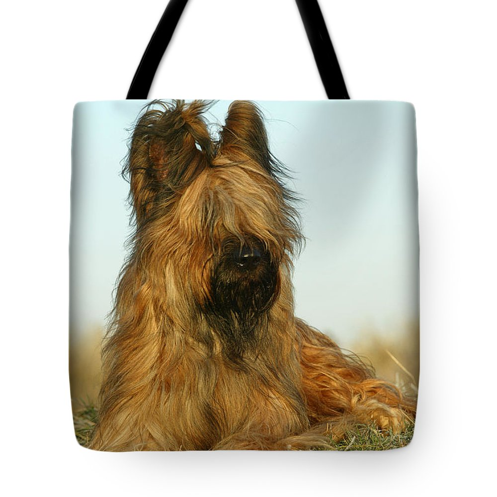 Briard Tote Bag featuring the photograph Briard Dog by Jean-Michel Labat
