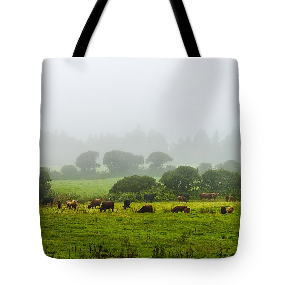Art Tote Bag featuring the photograph Cows At Rest by Joseph Amaral