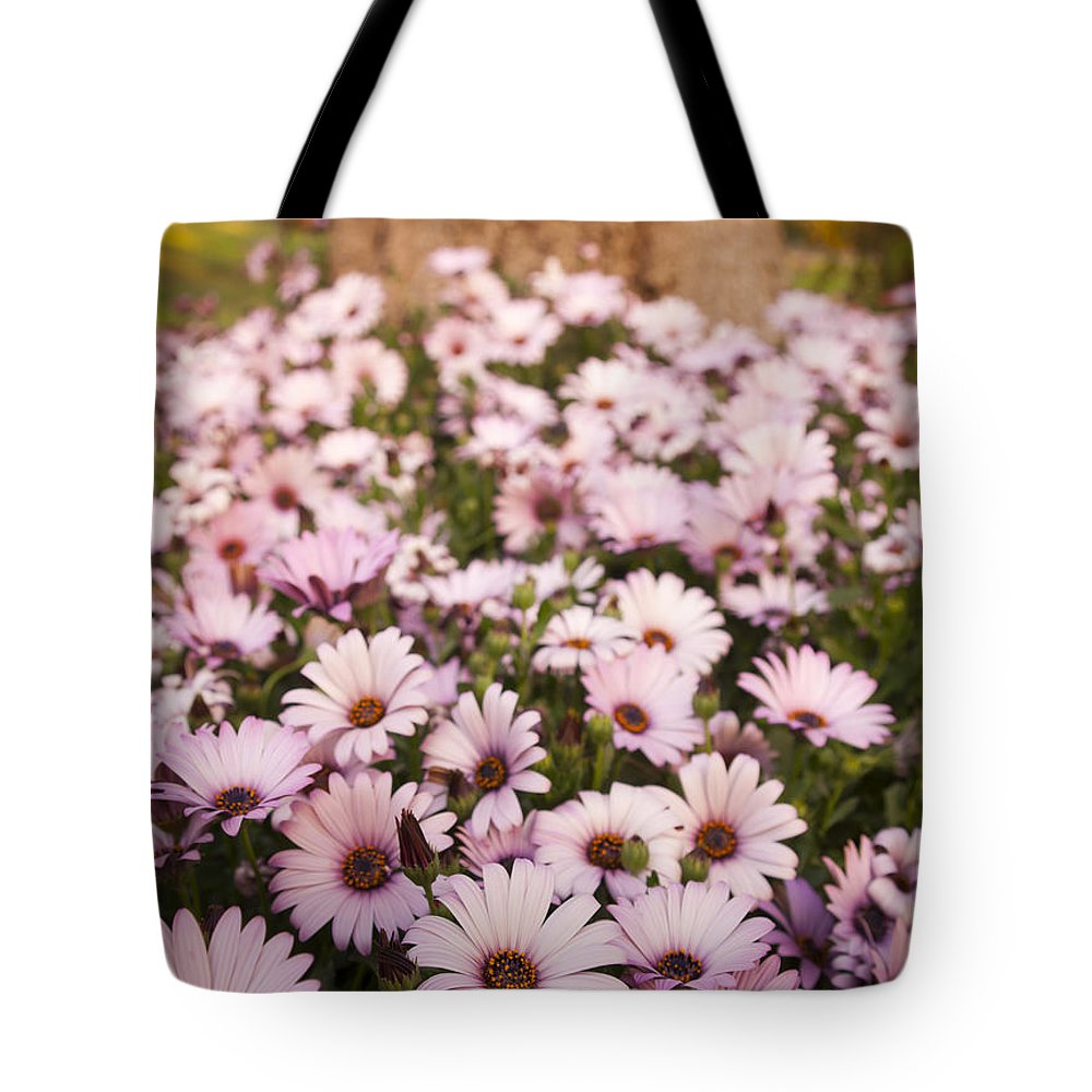 Background Tote Bag featuring the photograph Daisies by Tim Hester