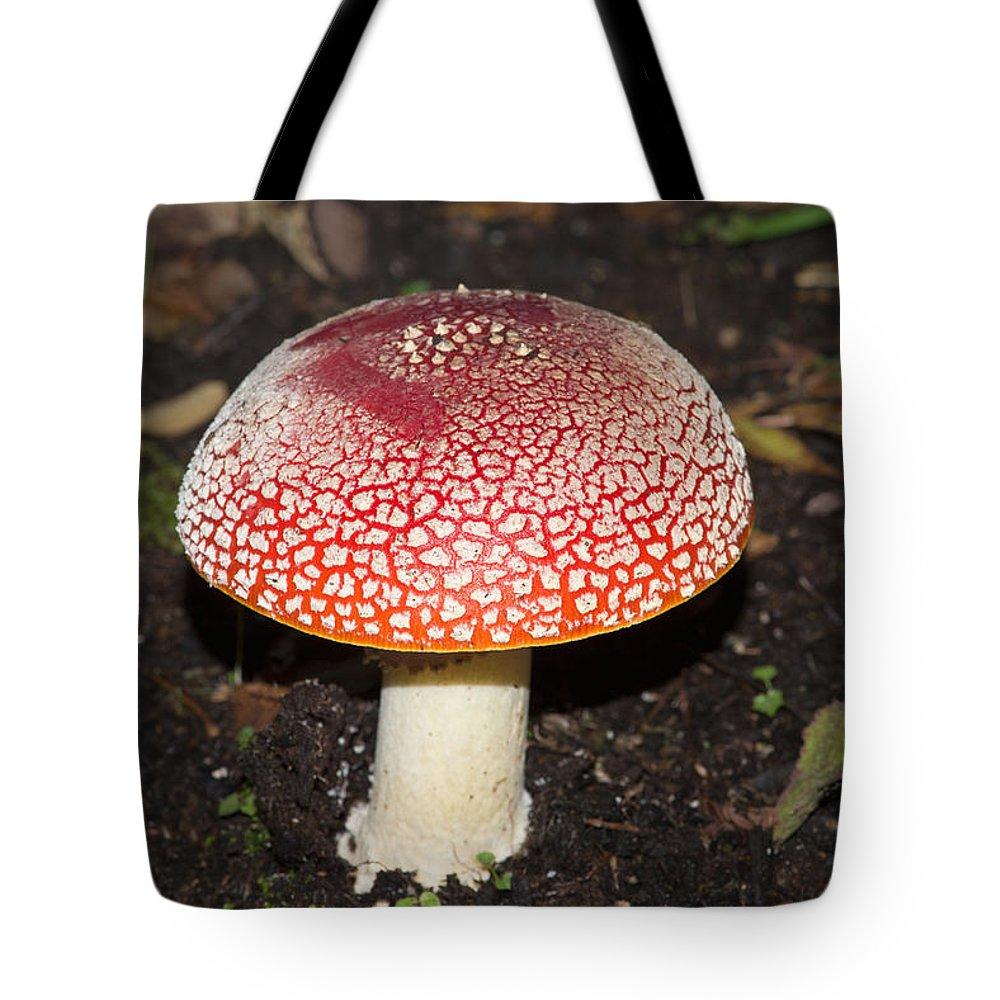 Amanita Muscaria Tote Bag featuring the digital art Fairy Mushrooms by Carol Ailles