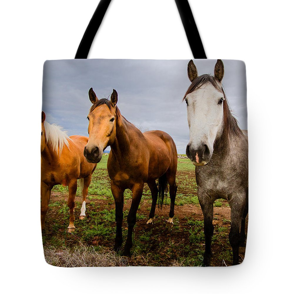 Mammal Tote Bag featuring the photograph 3 Horses by Jean Noren