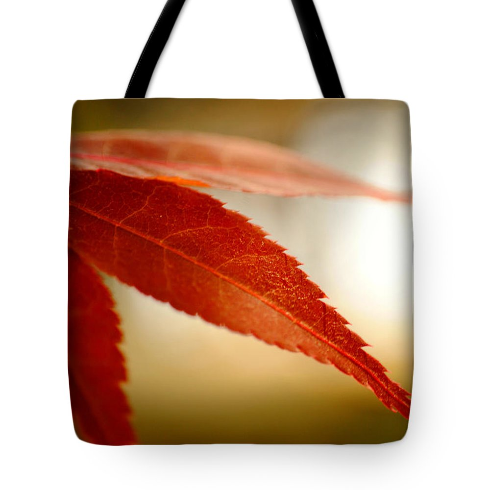 Japanese Maple Tote Bag featuring the photograph Japanese Maple Leaf by Kelly Nowak