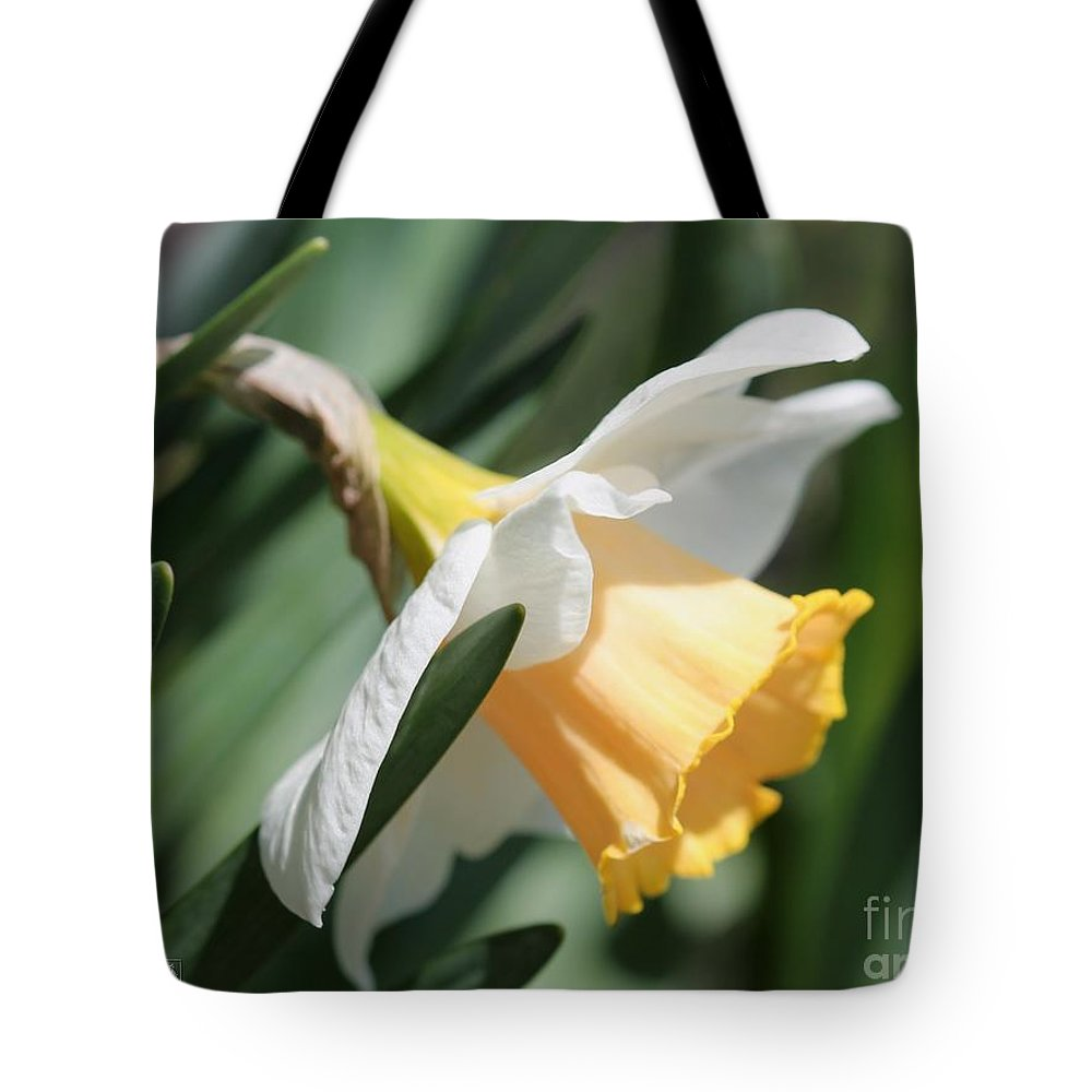 Mccombie Tote Bag featuring the photograph Large-cupped Daffodil Named Mrs. R.o. Backhouse by J McCombie