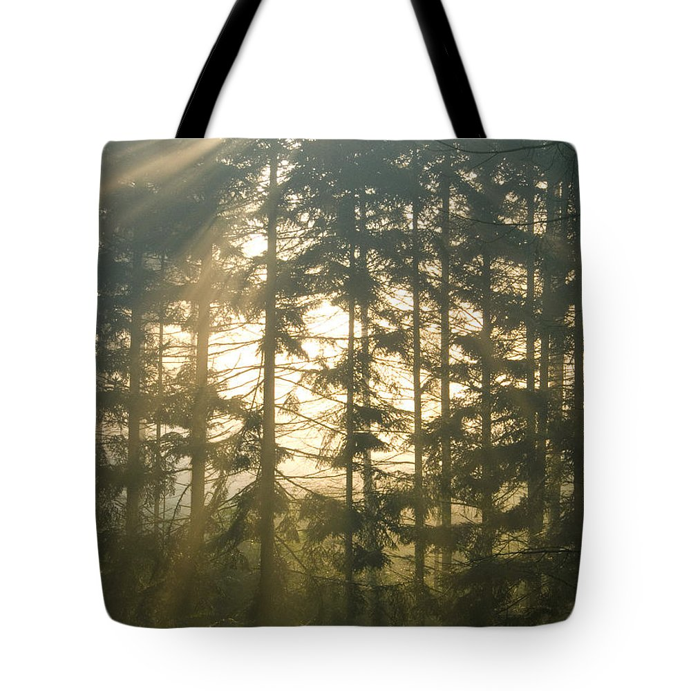 Nature Tote Bag featuring the photograph Light In The Forest by Daniel Csoka