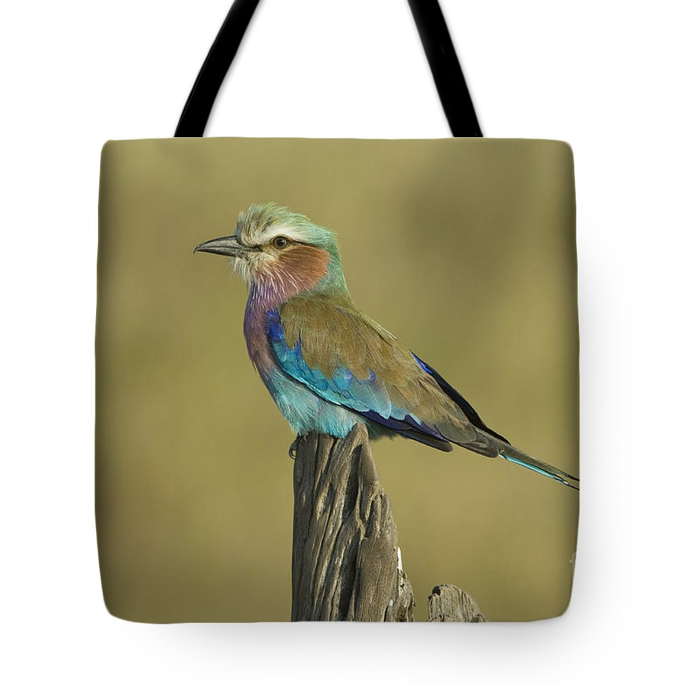 African Fauna Tote Bag featuring the photograph Lilac-breasted Roller by John Shaw