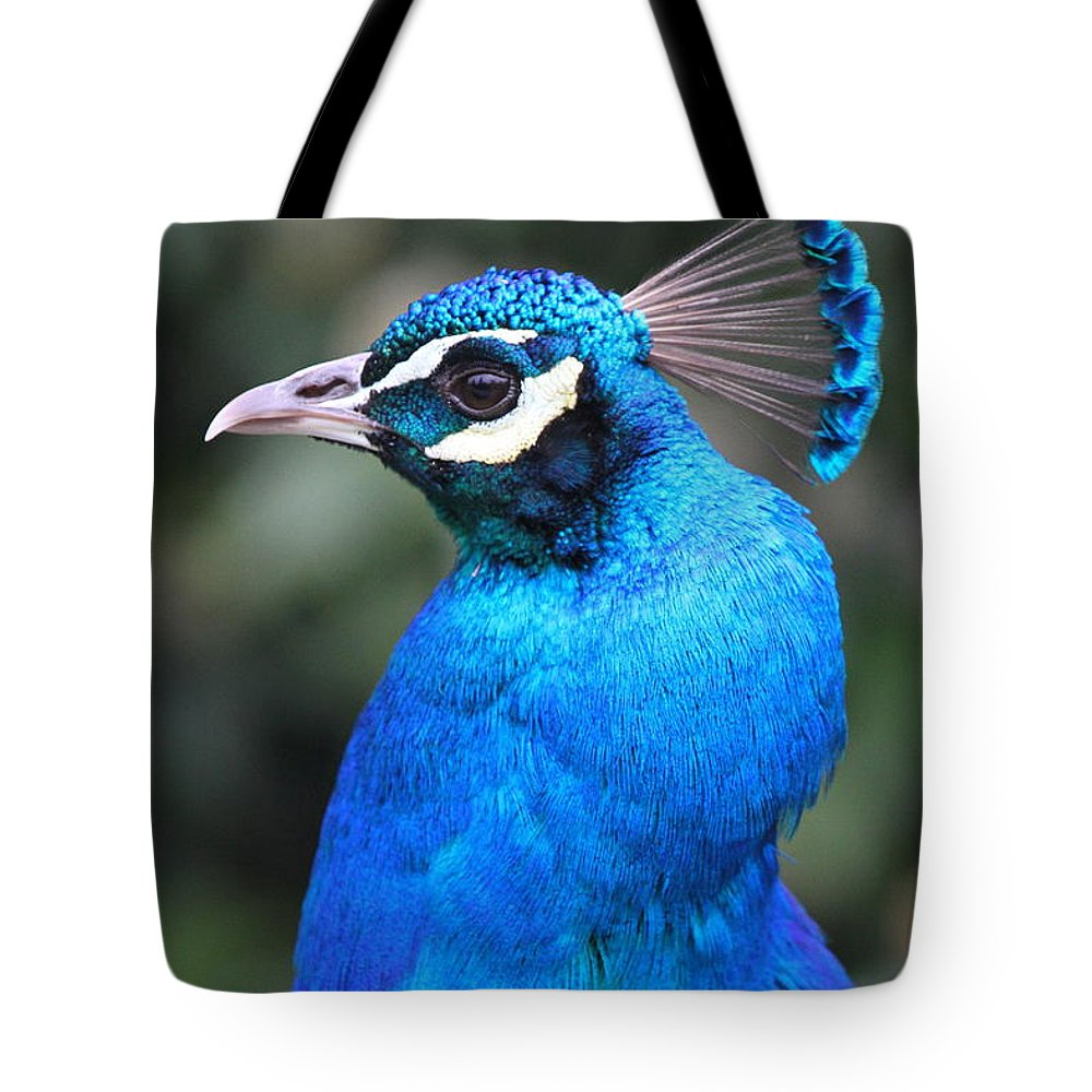 Blue Tote Bag featuring the photograph Male Peacock by Ken Keener