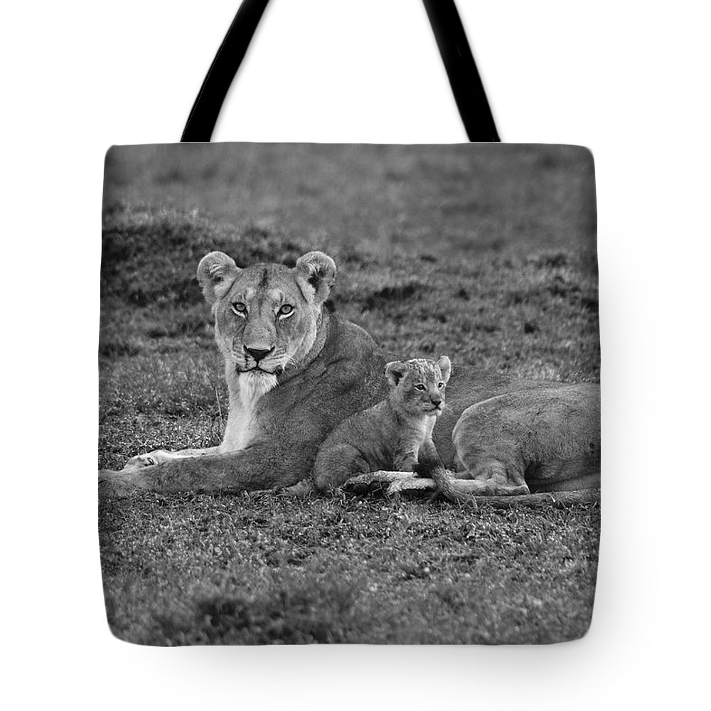 Lion Tote Bag featuring the photograph Mama's Little Baby by Michele Burgess