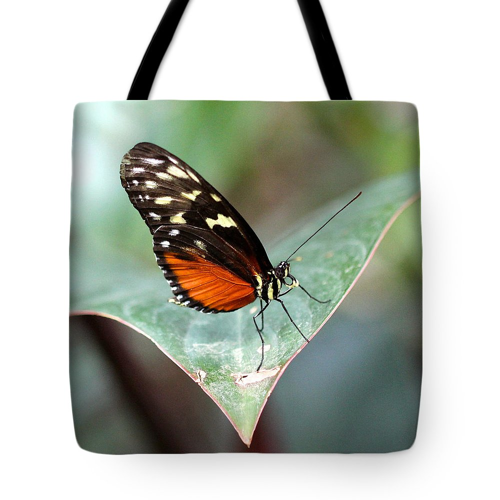 Hecale Longwing Tote Bag featuring the photograph Hecale Longwing Butterfly by Jill Blackwood