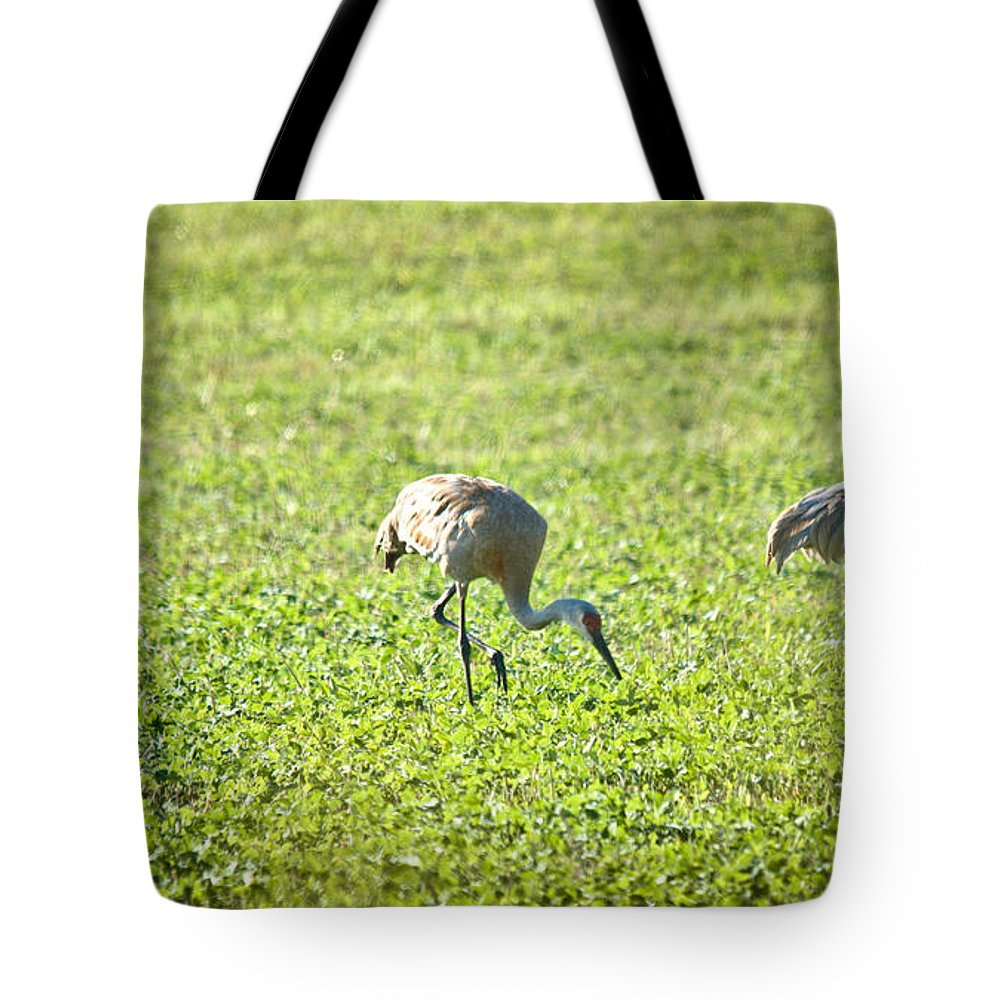 Sandhill Cranes Tote Bag featuring the photograph 3 Of A Kind by Cheryl Baxter