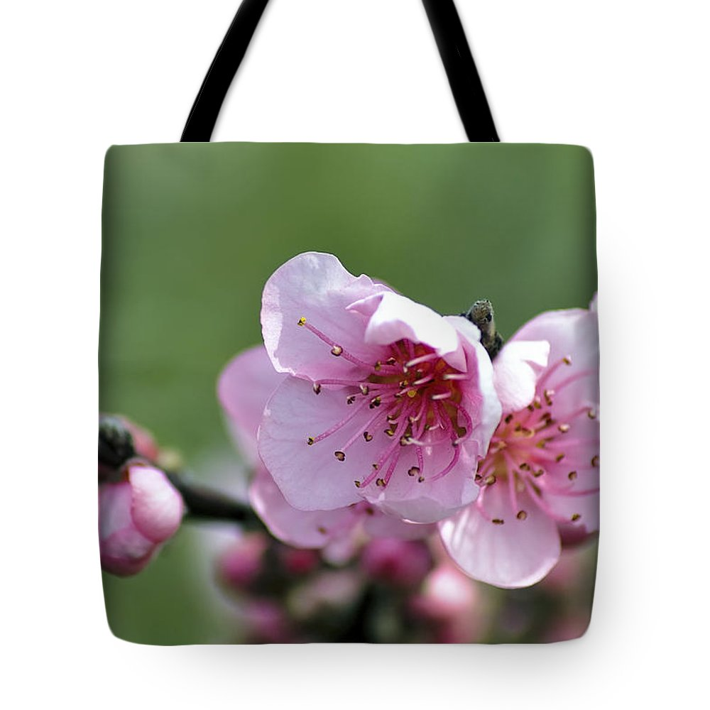 Winter Tote Bag featuring the photograph Pink Blossom by Paulo Goncalves