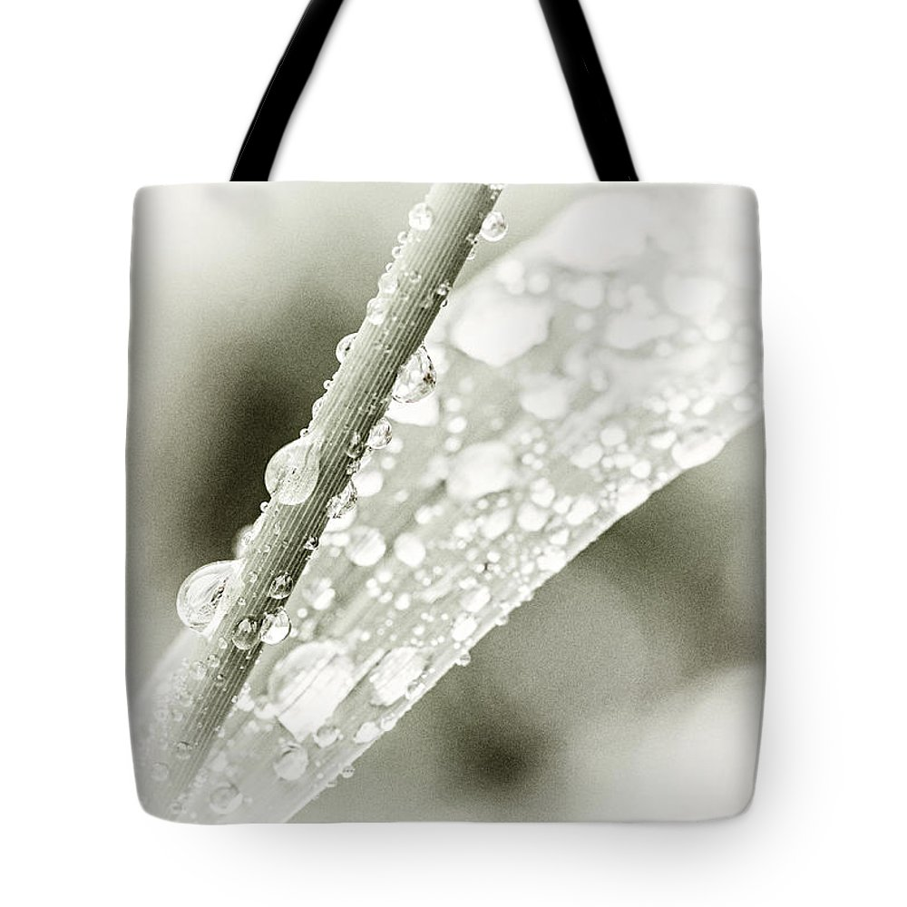 Grass Tote Bag featuring the photograph Raindrops On Grass by Elena Elisseeva