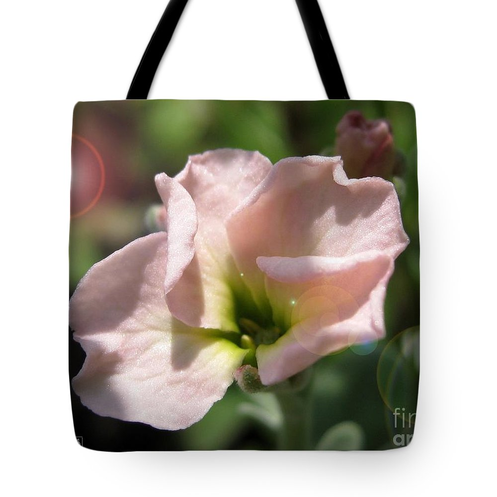 Mccombie Tote Bag featuring the photograph Single Peach Stocks From The Vintage Mix by J McCombie