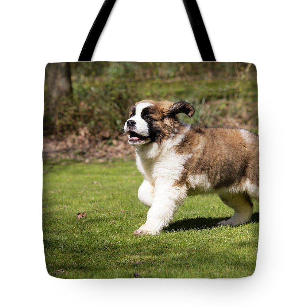 St Bernard Tote Bag featuring the photograph St Bernard Dog by John Daniels