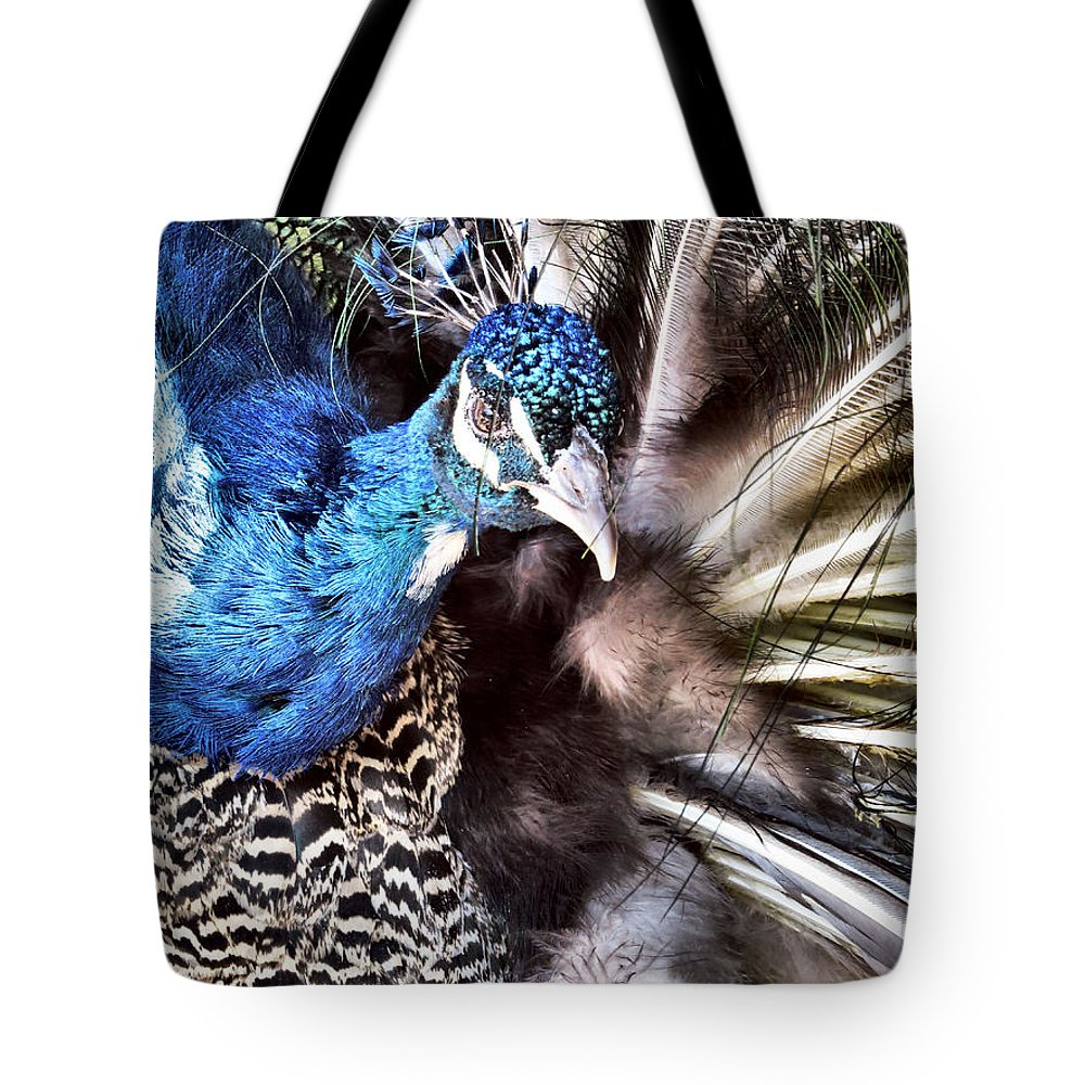 Peacock Tote Bag featuring the photograph Strike A Pose by Art Dingo