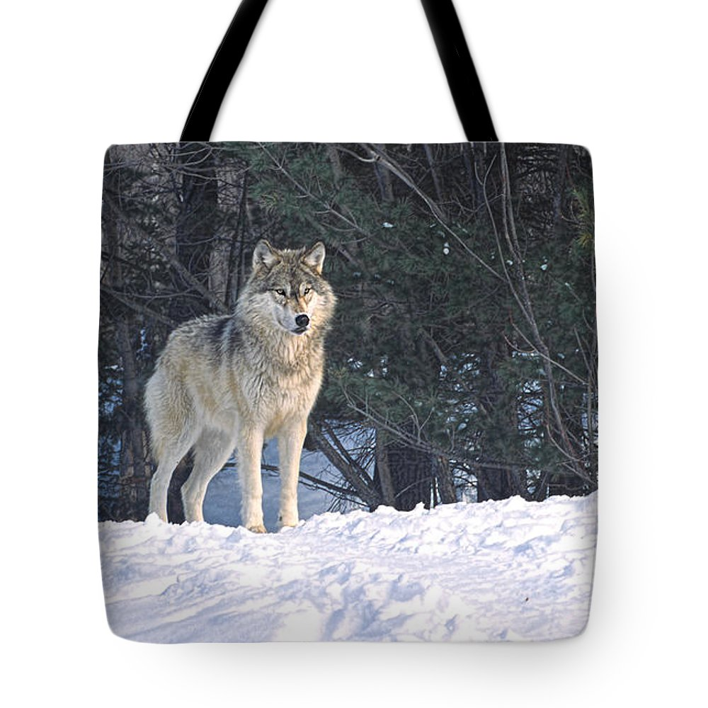 Timber Tote Bag featuring the photograph Timber Wolf by Les Palenik