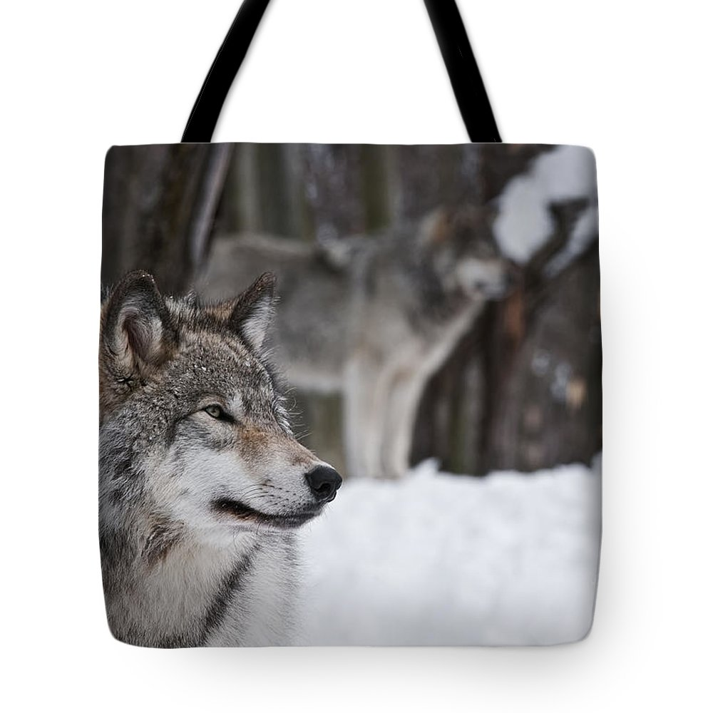Timber Wolf Photography Tote Bag featuring the photograph Timber Wolf Pictures by Wolves Only